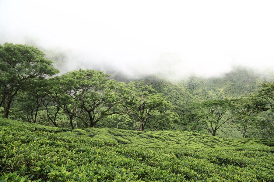 Pandam Tea Estate
